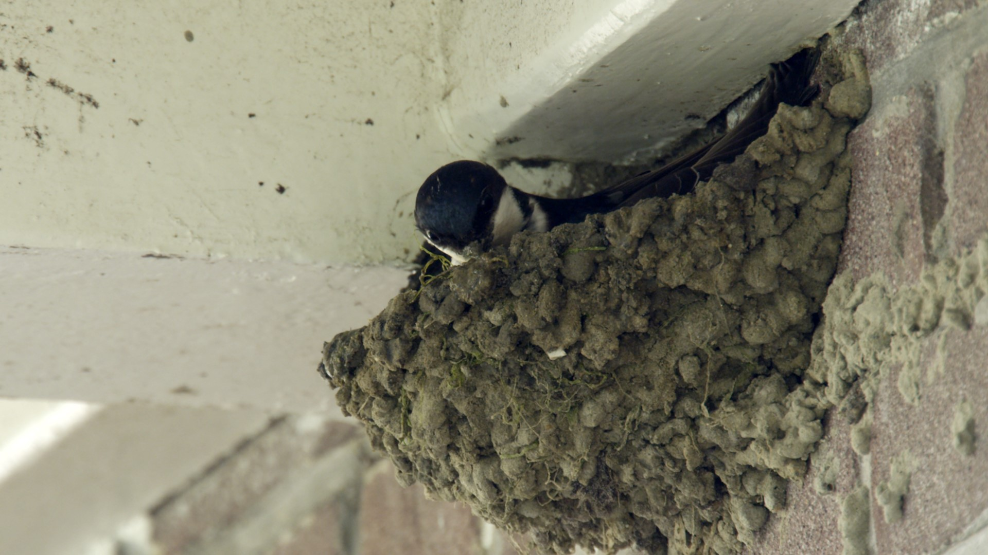 HELPING HOUSE MARTINS