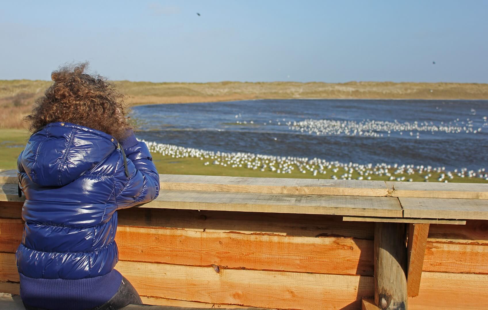 foto vogelkijkpunt Renvogelveld 004 Large